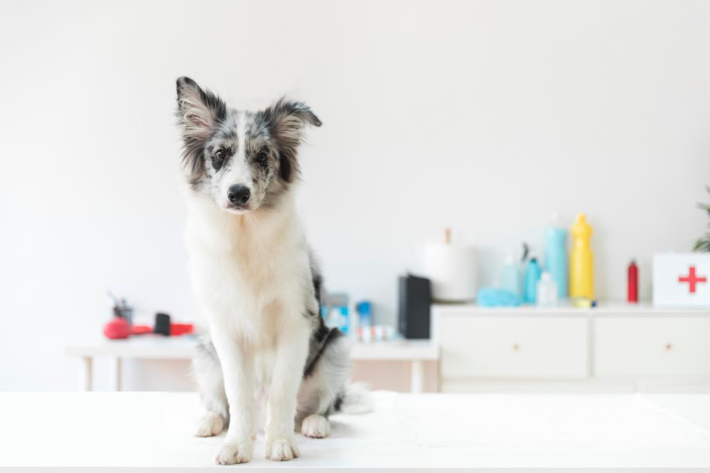 Permissão de visitação de animais domésticos e de estimação em hospitais é tema de audiência pública