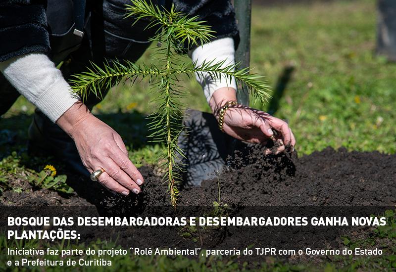 Bosque das Desembargadoras e Desembargadores ganha novas plantações nesta segunda e terça-feira